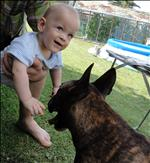 taky musím přeprat toho našeho psa!!!