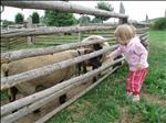Na dovče jsme krmili ovce...